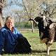 Lori Faye Bock with her genteel Jacob ram, Teddyroo