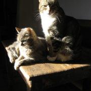 Lori Faye Bock's Cats