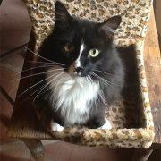 Jackson, Lori Faye Bock's Cat